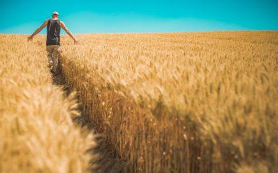 Nawozy organiczne – najlepsza opcja?